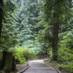 Деревянная дорожка для сада и дачи