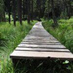 Дорожка деревянная для дачи
